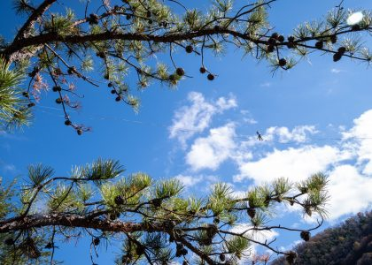 low angle photography of green tree under blue sky during daytime